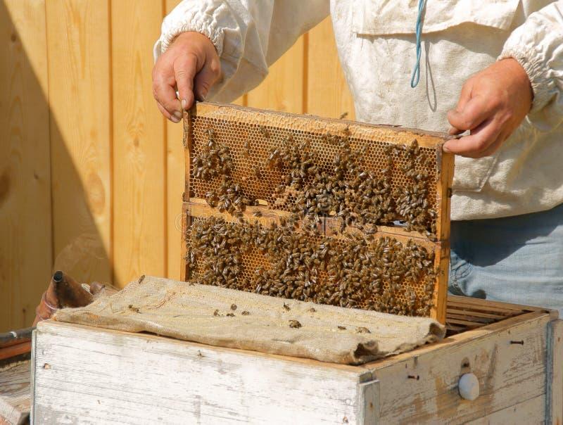 L'apiculteur contrôle le miel image libre de droits