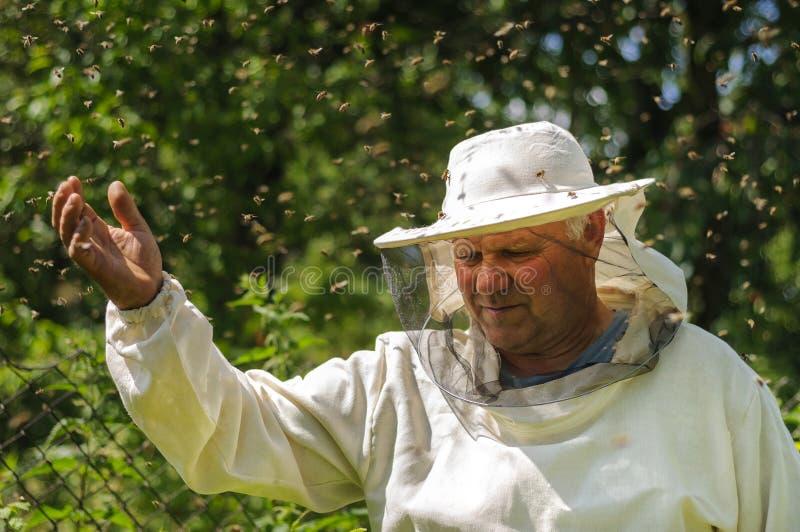 L'apiculteur et l'abeille grouillent, miel de ruche de rucher image libre de droits