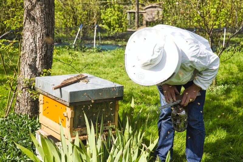 L'apiculteur regardant l'abeille ? la ruche Soin des abeilles dans le rucher images libres de droits