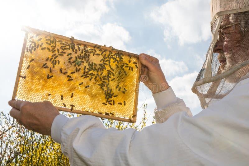 L'apiculteur tient le nid d'abeilles d'une ruche contre le soleil images stock