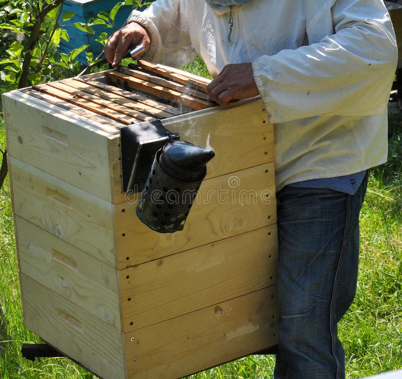 L'apiculteur travaille à un rucher images libres de droits