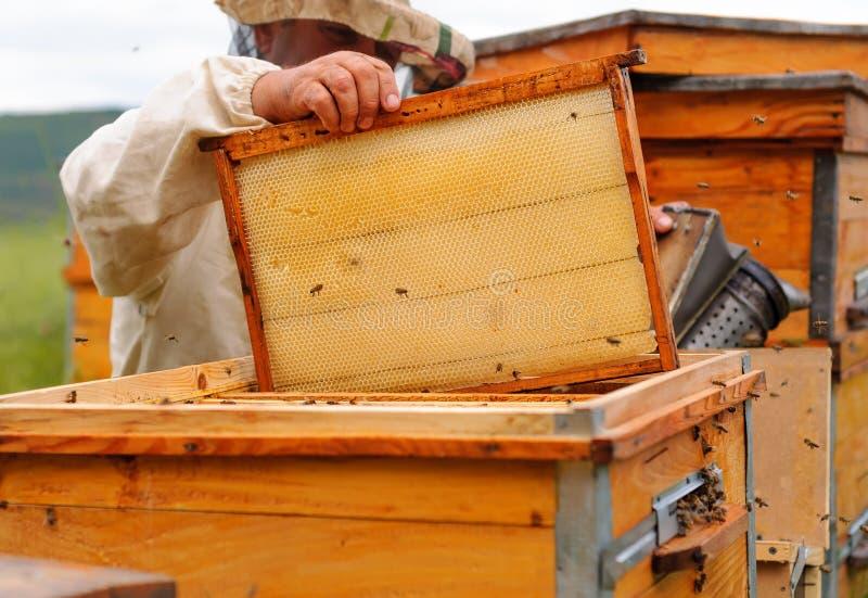 L'apiculteur travaille avec des abeilles et des ruches sur le rucher photographie stock