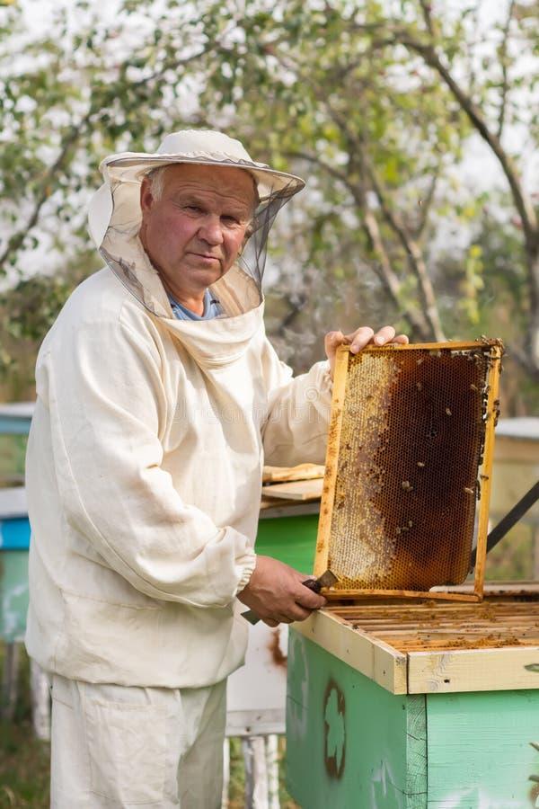 L'apiculteur travaille avec des abeilles et des ruches sur le rucher images stock