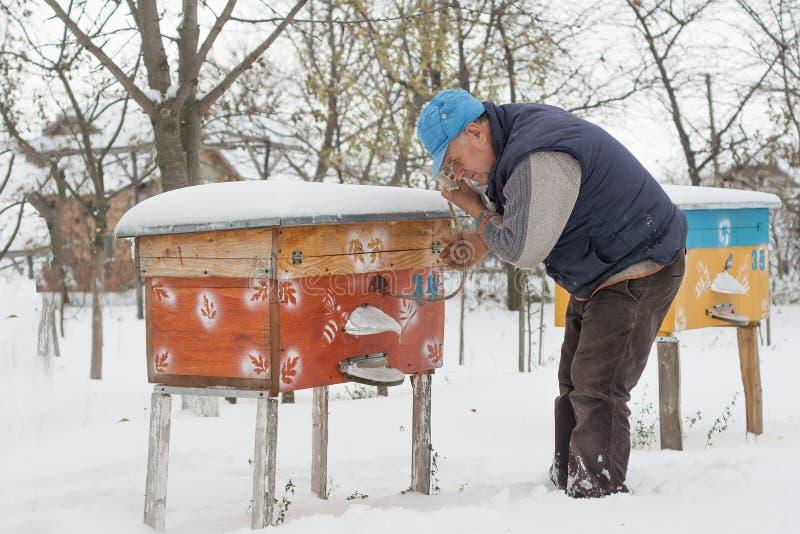 L'apiculteur travaille avec des abeilles et des ruches sur le rucher image libre de droits