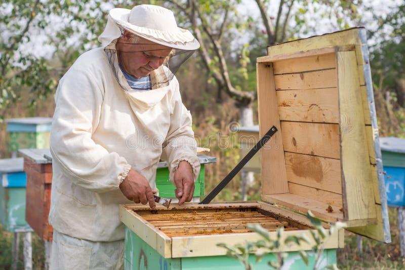L'apiculteur travaille avec des abeilles et des ruches sur le rucher images libres de droits