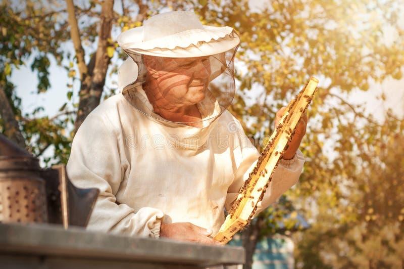 L'apiculteur travaille avec des abeilles et des ruches sur le rucher Apiculture image stock