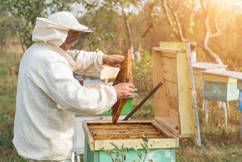 L'apiculteur travaille avec des abeilles et des ruches sur le rucher Apiculture photos stock