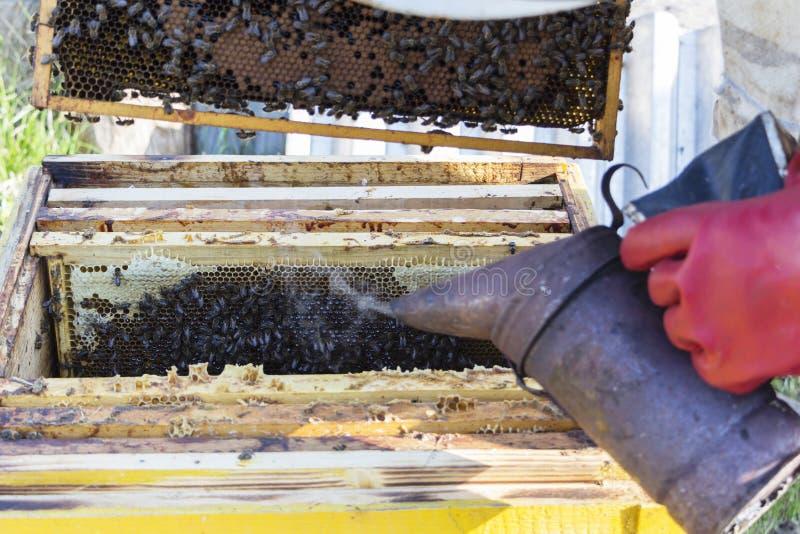 L'apiculteur travaille avec des abeilles et des ruches sur le rucher Fumeur d'abeille fumigé par apiculteur photos stock