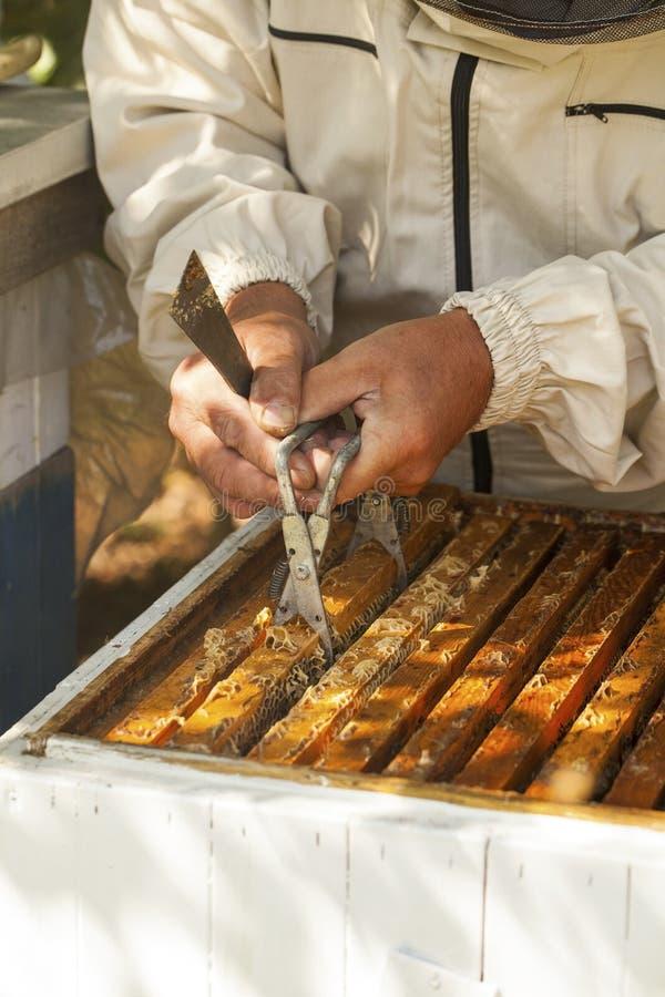 L'apiculteur travaille avec des abeilles image libre de droits