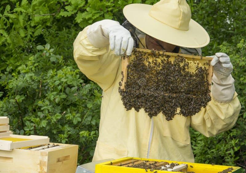 L'apiculteur travaille dans une ruche images stock