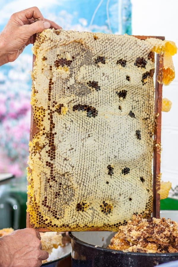 L'apiculteur vérifiant le cadre de nid d'abeilles photographie stock libre de droits