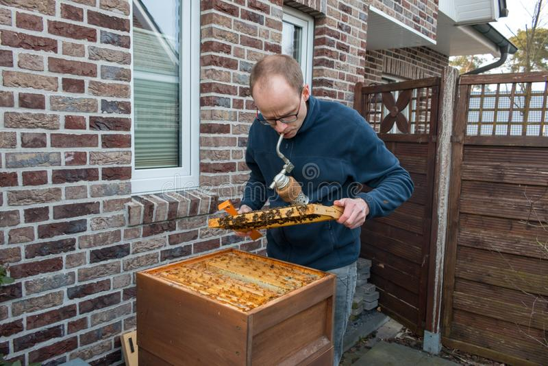 L'apiculteur vérifie sa colonie d'abeille utilisant un fumeur images stock