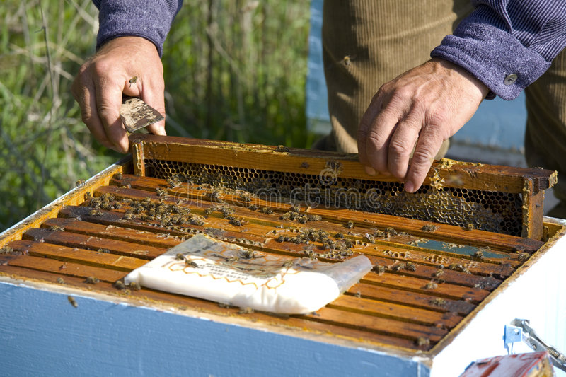 L'apiculture photos libres de droits