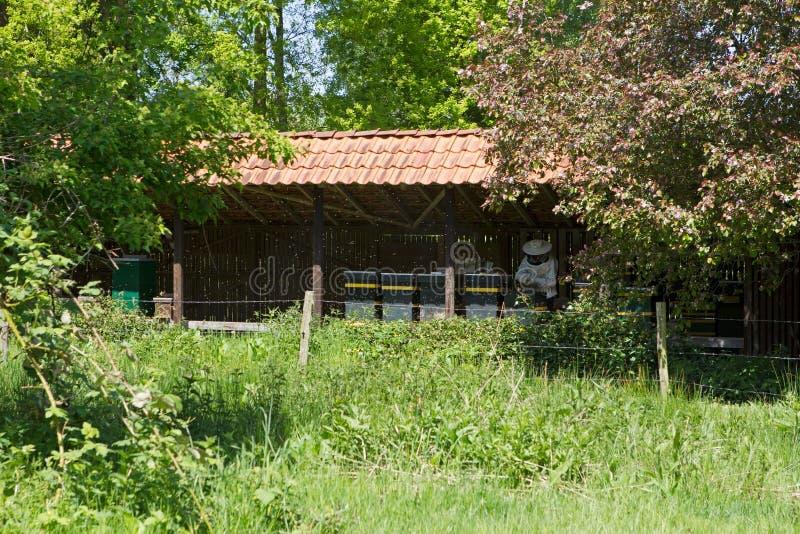 L'apiculture dans Hoogeveen Pays-Bas photos libres de droits