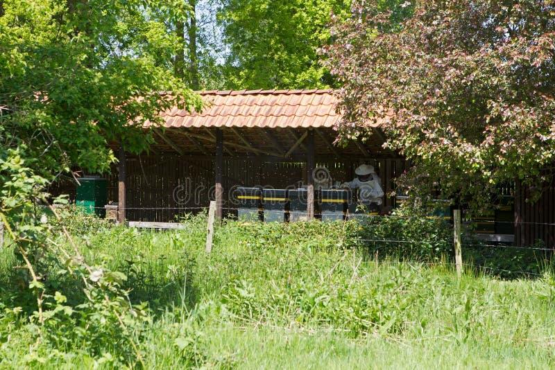 L'apiculture dans Hoogeveen, Pays-Bas image libre de droits