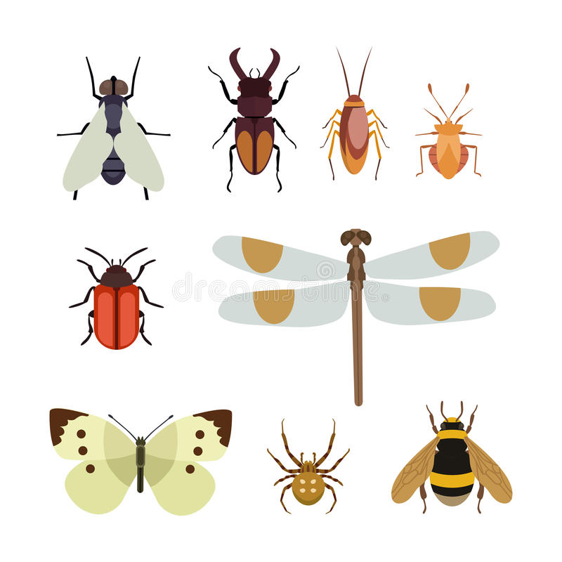 L'appartement d'icône d'insecte a isolé la fourmi de scarabée de papillon de vol de nature et la sauterelle d'araignée de faune o illustration stock