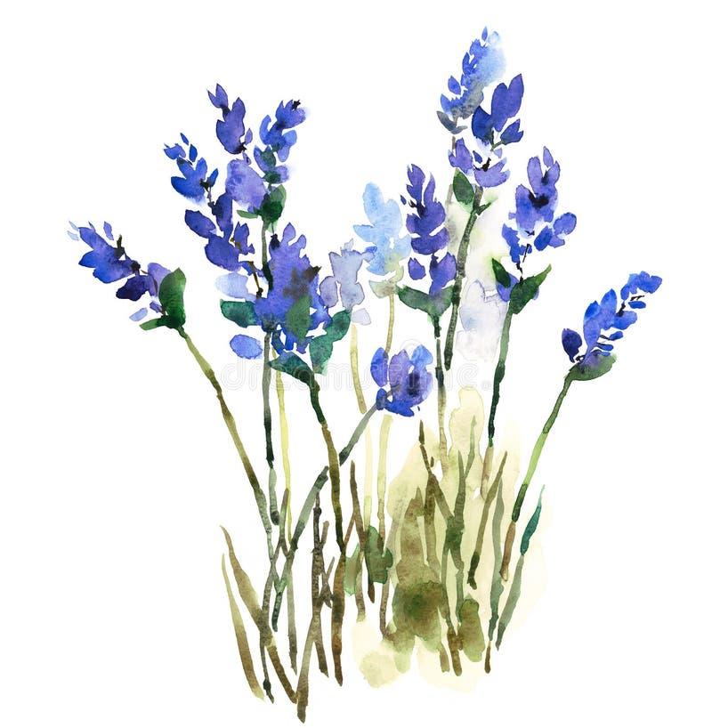 L'aquarelle de lavande fleurit l'illustration peinte à la main illustration libre de droits