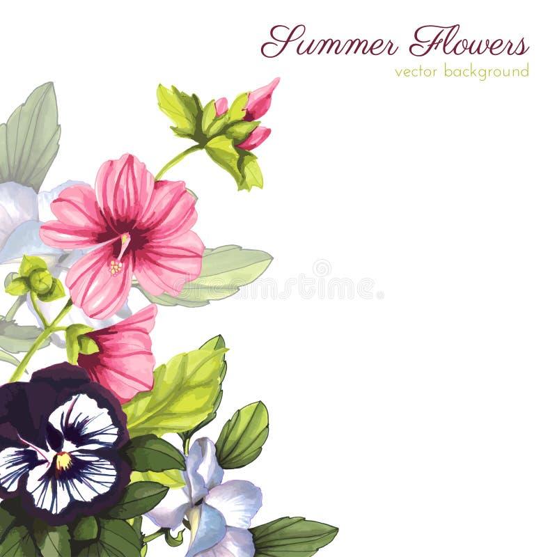 L'aquarelle fleurit le cadre Lavatera et altos illustration de vecteur