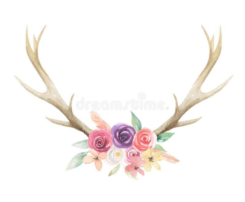 L'aquarelle fleurit l'os floral de klaxons de mâle de cerfs communs d'andouillers peint illustration libre de droits