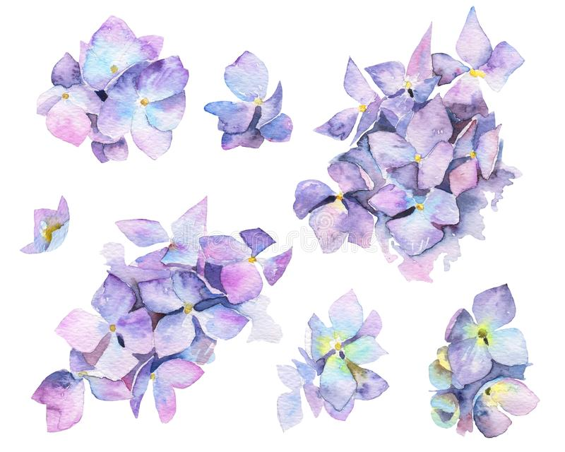 L'aquarelle a peint des fleurs d'hortensia illustration stock