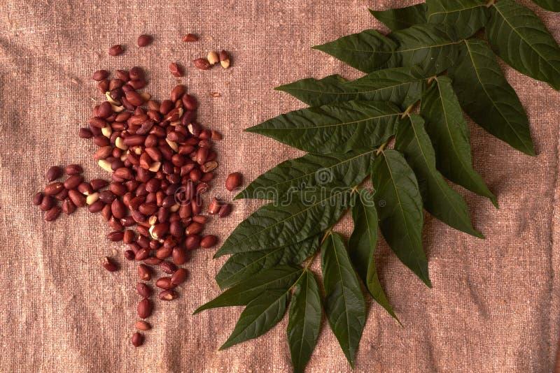 l'arachide della noce ha sparso sul fondo della tela di sacco con la pianta verde vicino Vista superiore immagine stock libera da diritti