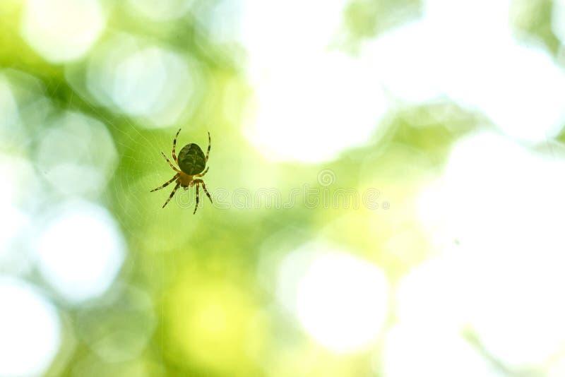 L'araignée accroche sur le Web pour rougeoyer reflétante les rayons du soleil images stock
