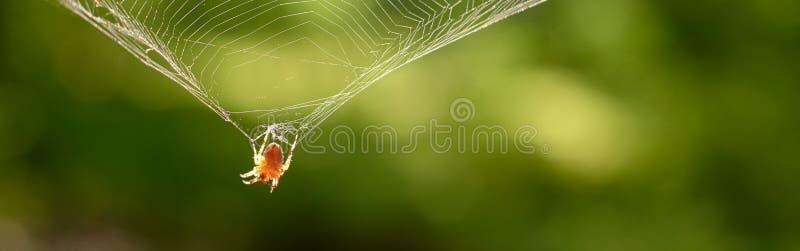 L'araignée accroche sur le Web pour rougeoyer reflétante les rayons du soleil photographie stock
