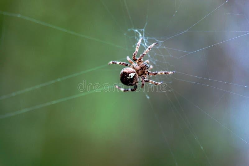 L'araignée rampe sur le Web photos stock