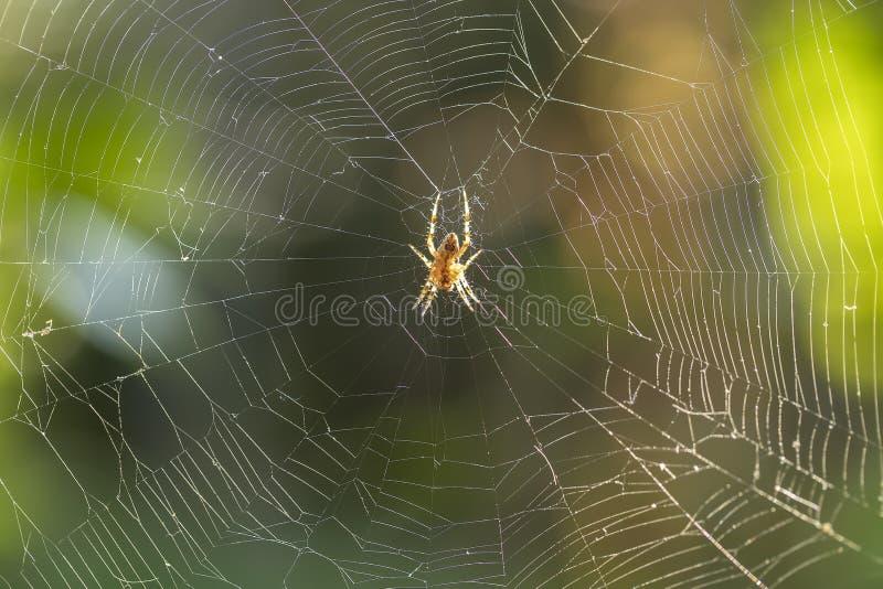 L'araignée tisse des toiles d'araignée photos stock