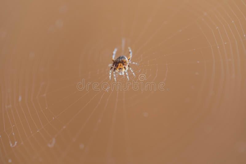 L'araign?e se repose sur le Web tiss? image stock