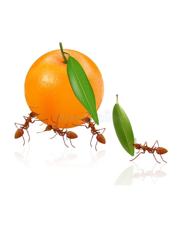 L'arancia di trasporto potente delle formiche illustrazione vettoriale