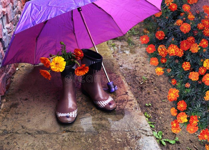 L'arancia fiorisce i tagetes in stivali di gomma sotto un ombrello porpora