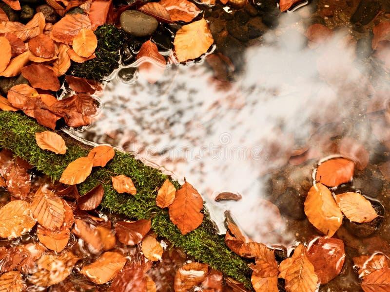 L'arancia lascia la struttura in fiume Foglie cadute del faggio nel fiume della montagna, fotografia stock libera da diritti