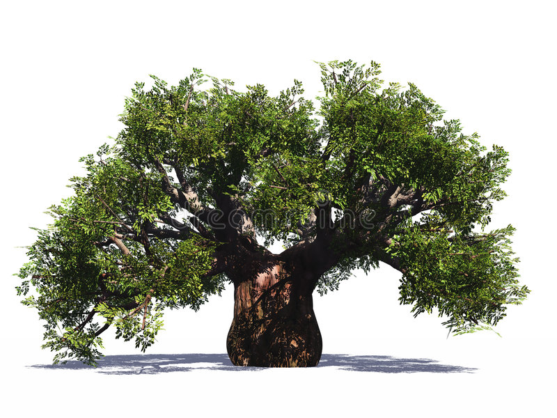 L'arbre énorme de baobab a isolé image stock