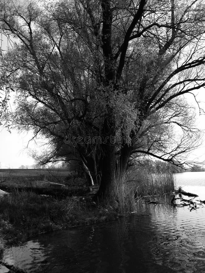L'arbre photographie stock