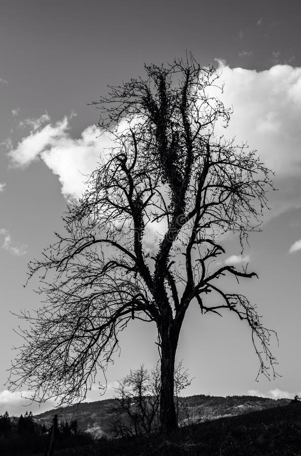 L'arbre image stock