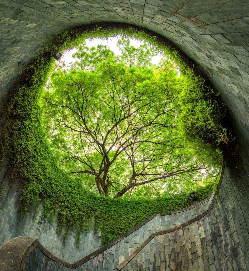 L'arbre au-dessus du passage couvert de tunnel le parc et à Penang de mise en boîte roa de fort image stock