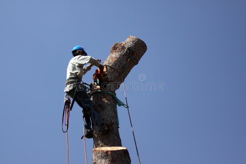 L'arbre contacte la tronçonneuse photographie stock