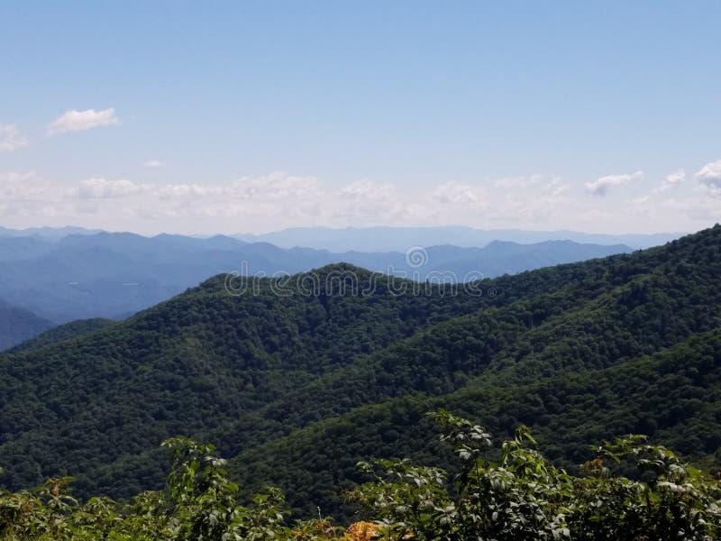L'arbre a couvert des montagnes photos libres de droits