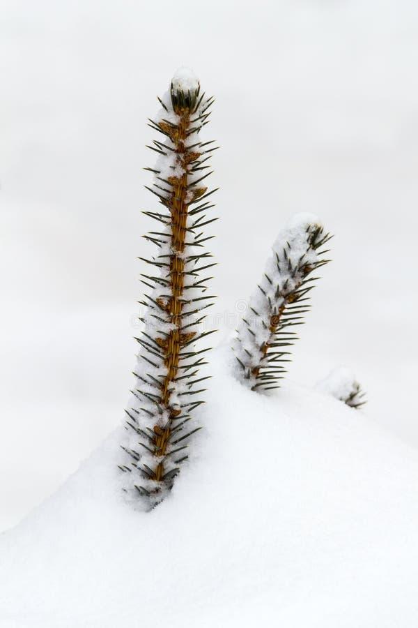 L'arbre décoratif supérieur de dessous la neige photographie stock