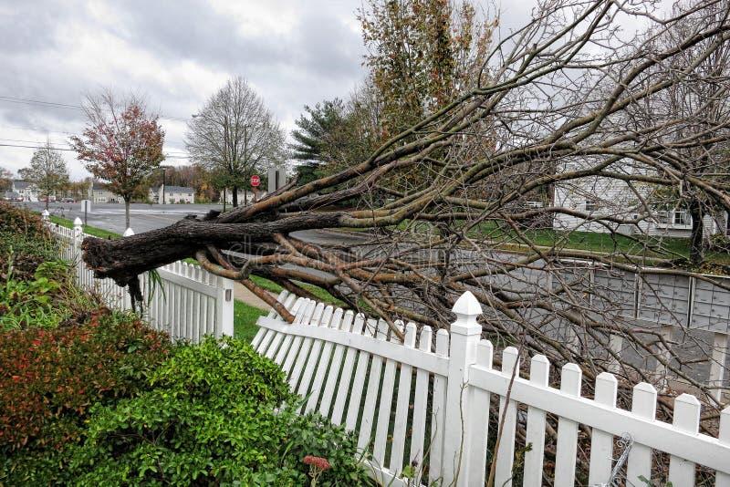 L'arbre déraciné tombe en panne en cour d'ouragan Sandy photographie stock