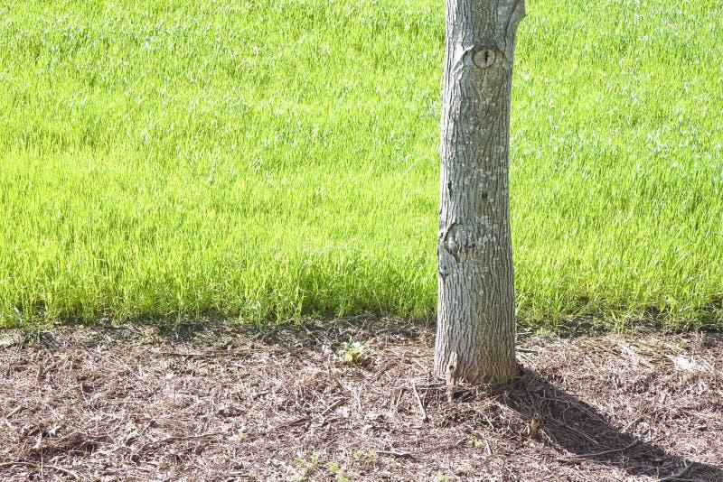 L'arbre d'isolement en vert a classé - l'image avec l'espace de copie images libres de droits