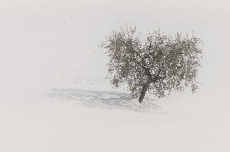 L'arbre dans la neige photos stock