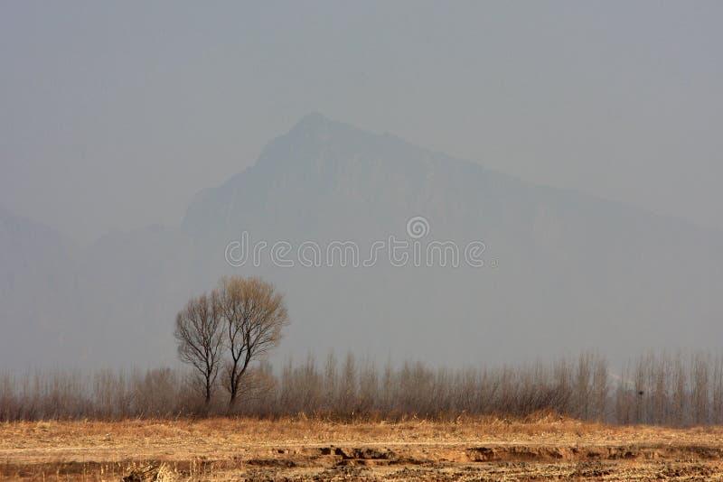 L'arbre dans le domaine photos stock
