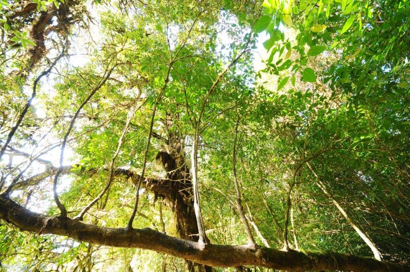 L'arbre dans une forêt verte photographie stock libre de droits
