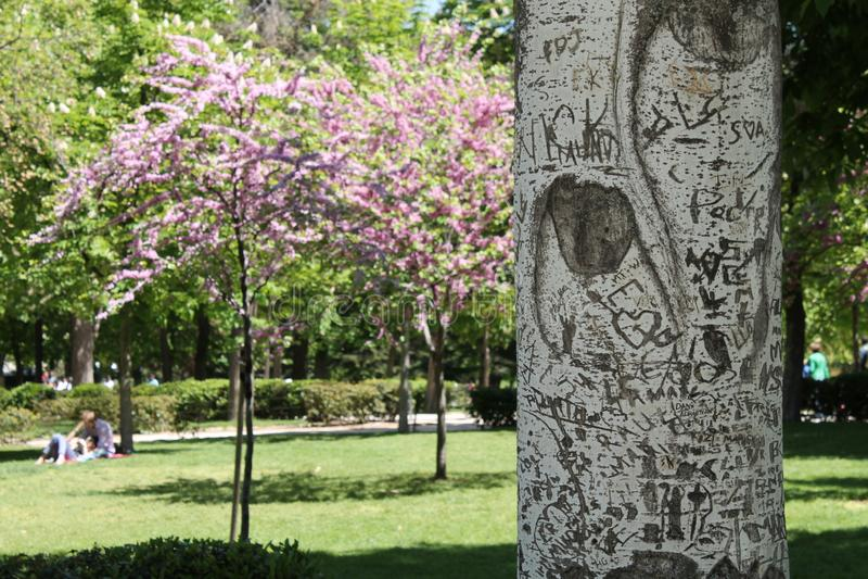 L'arbre de l'amour photographie stock libre de droits
