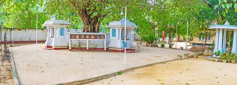L'arbre de BO du temple de Halpanwila photos libres de droits
