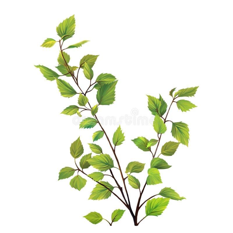L'arbre de bouleau vert part, buisson avec les feuilles fraîches photo stock