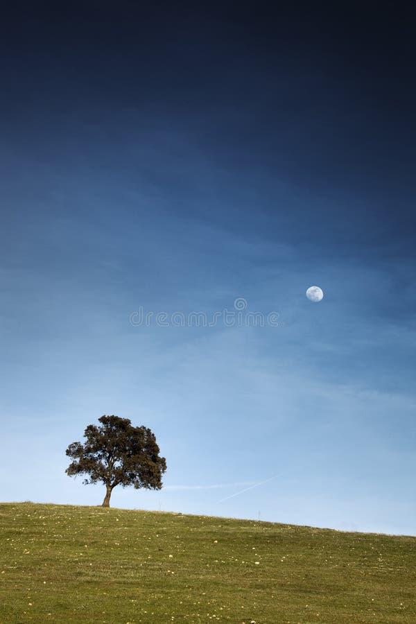 L'arbre de chêne qui a regardé la lune photographie stock