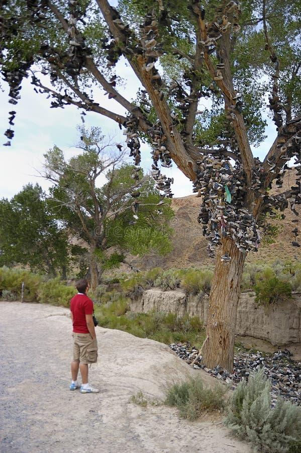 L'arbre de chaussure ! image libre de droits